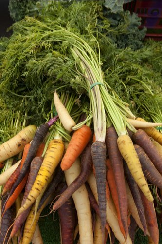A photograph of several bunches of carrots of various different colours.