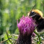 The Insect Apocalypse And Its Disastrous Consequences For Us