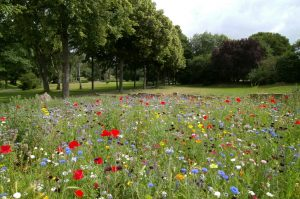 A photograph of a wildflower meadow with trees in the background