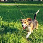Every Day Carry Survival Kit For Dog Owners