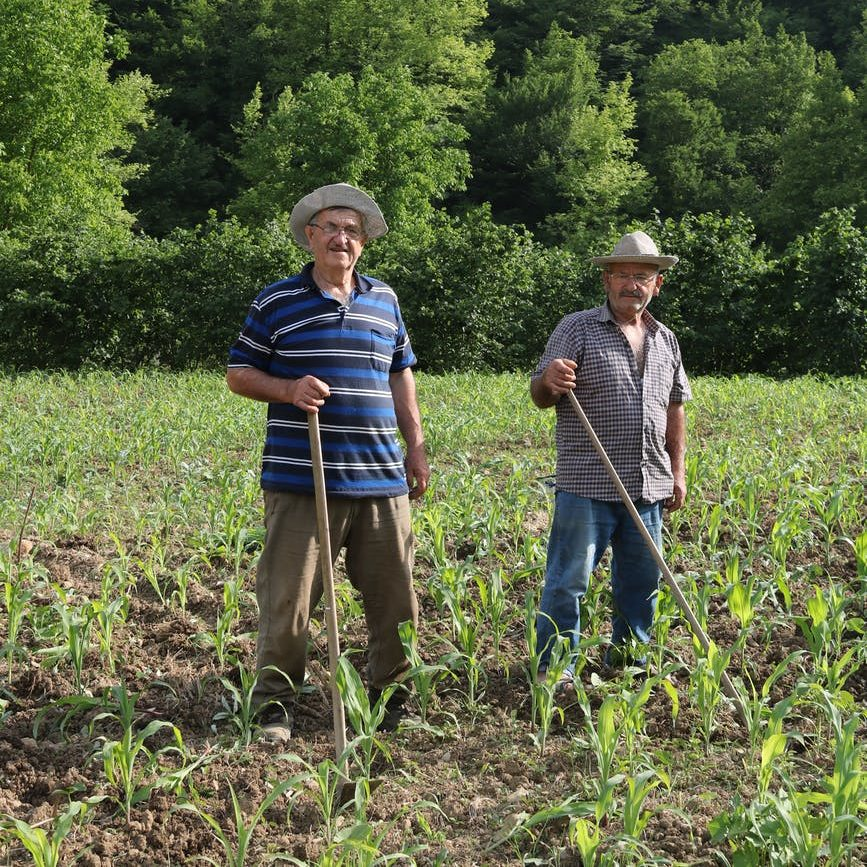 two farmers standing on a cropland